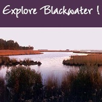 blackwater-national-wildlife-refuge-md