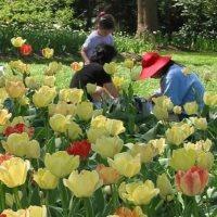 Sherwood Gardens Maryland Gardens and Arboretums
