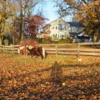 Fairwinds Farm and Stables Horseback Trail Rides in Maryland