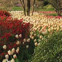 sherwood-gardens-md