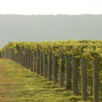 Big Cork Vineyards Best Wineries in Maryland