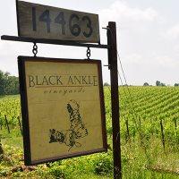 Black Ankle Vineyards Best Wineries in MD