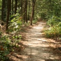 Adkins Arboretum Maryland Arboretums and Gardens