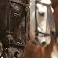 City Ranch MD Horseback Riding