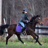 Reddemeade Equestrian Center Horseback Riding in MD