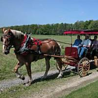 Pleasant Valley Dream Rides Horseback Riding in MD
